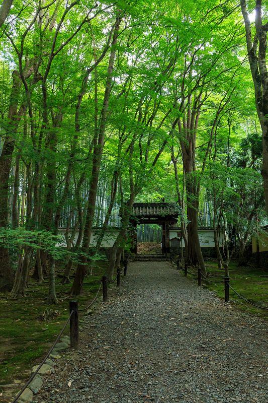 十六羅漢の庭(竹の寺・地蔵院) : 花景色-K.W.C. PhotoBlog