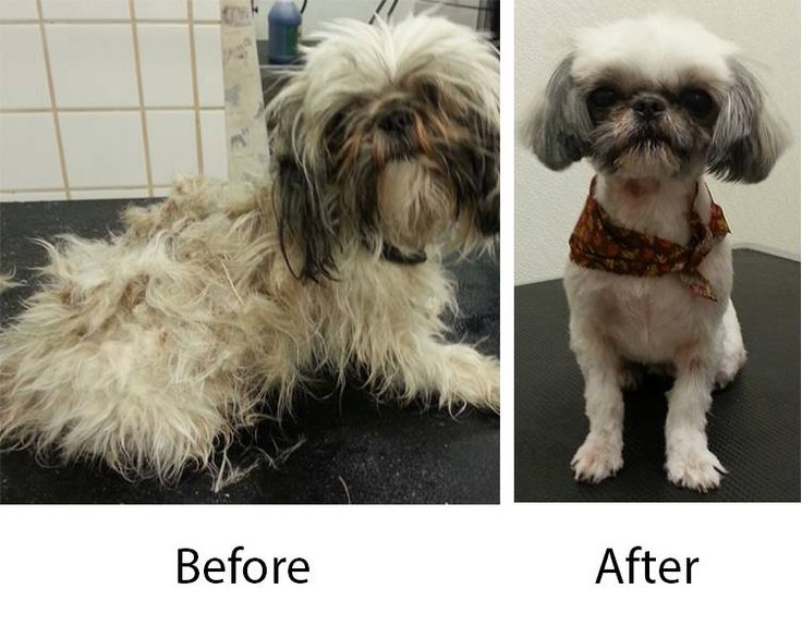 This little cutie was groomed at Scruffy to Fluffy Pet Salon in Ortonville, MI