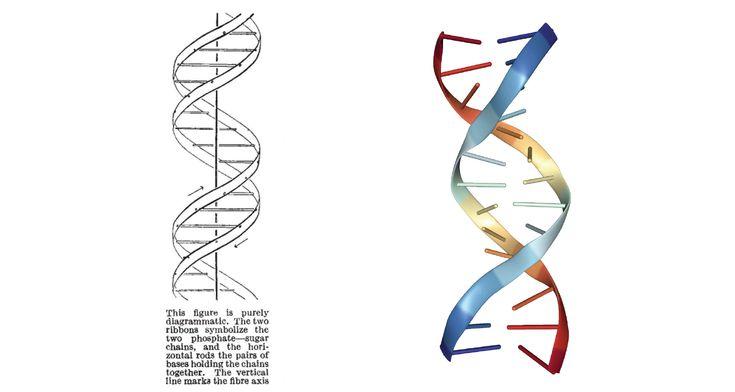 Hay otra mujer detrás de la doble hélice de ADN La mujer tras la hélice - Principia