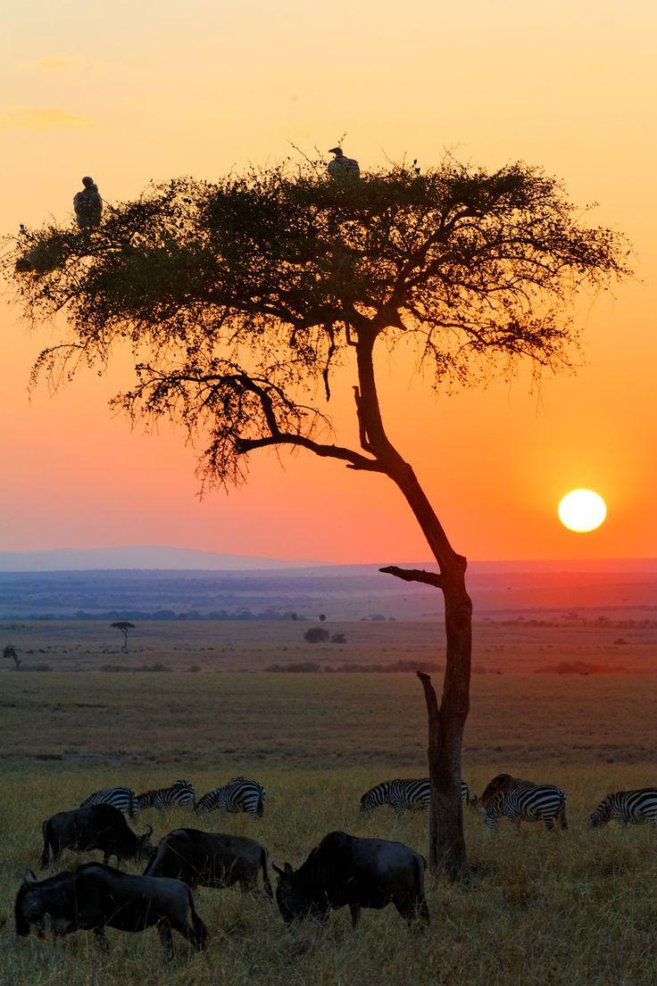 Sunrise in Masai Mara National Reserve, Kenya.