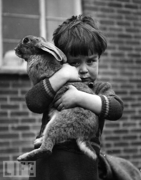 Charles Hewitt - A Boy and His Bunny,1952. That face! Omgosh, so sweet.