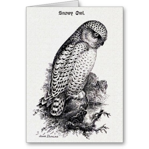 7 best del norte coast redwoods sp images on pinterest for Tattoo shops gainesville ga