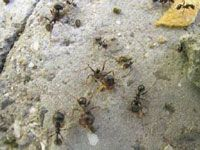 Take your kids outside to look for ants and observe their behavior. Ants are social insects that live in large colonies and have developed a complex system of communicating with one another.