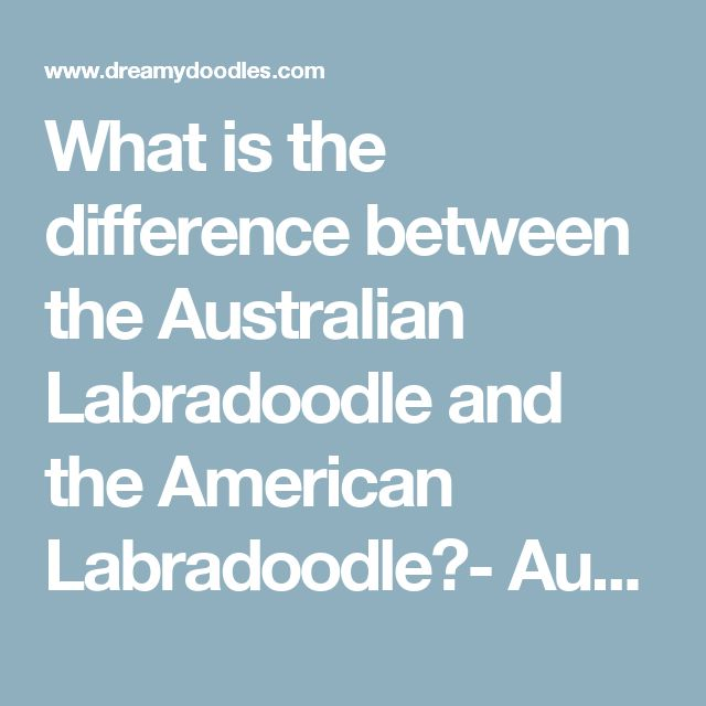 What is the difference between the Australian Labradoodle and the American Labradoodle?- Aussiedoodle and Labradoodle Puppies | Best Labradoodle Breeders in Washington State, Portland, Oregon
