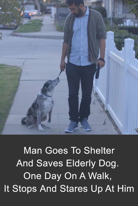 This man saved an elderly dog from the shelter - and one day on a walk, the dog stared up at him. #dogs #touching #pets #love