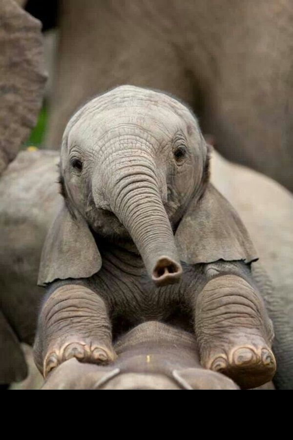 Beautiful Baby Elephant Pictures (5)