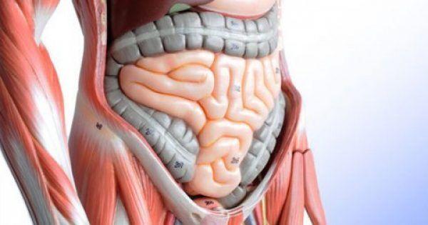 Υγεία - Γνωρίζετε ότι το 60-80% του ανοσοποιητικού σας συστήματος βρίσκεται στο έντερο σας; Γι 'αυτό και η καλή λειτουργία του πεπτικού συστήματος είναι απαραίτητη