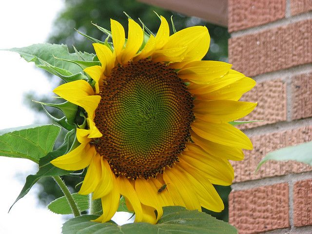 Mammoth sunflowers!  They get so tall and keep bees, butterflies and small birds happy!