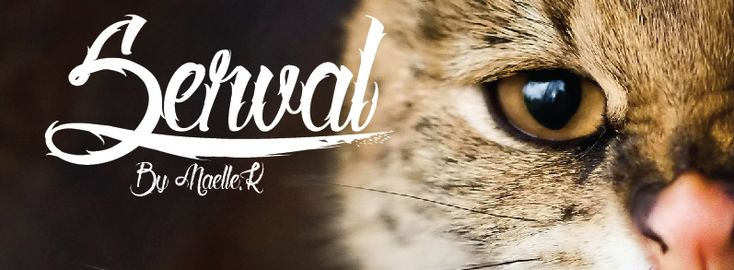 Tattoo Fonts – Improve Your Design with Classy Letterings