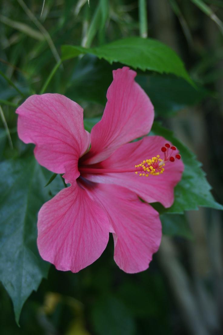 Flower, Bali.