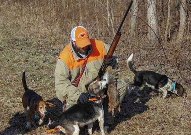 Hunting Dog Training Huntingdogtraining Beagle Hunting Hunting