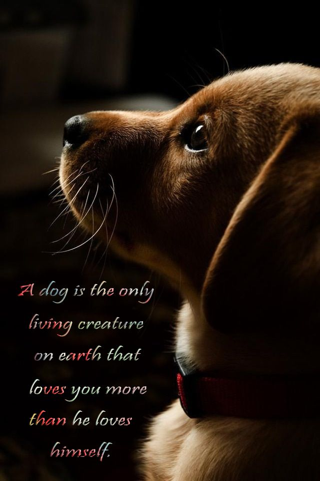 A dog is the only living creature that loves you more than he loves himself.