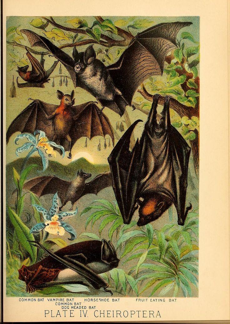 Вечеринка вампиров: как летучие мыши делятся выпитой кровью — National Geographic Россия