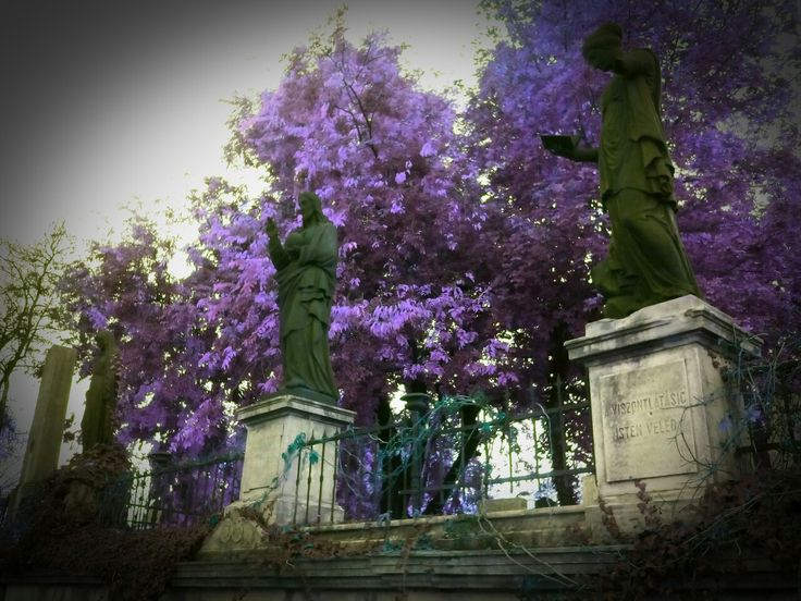 Cemetery Syringa