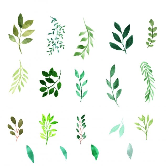 Watercolor Hand Painted Leaves S Plant Watercolor Png And