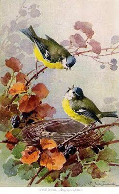 resimhobi: Kuş Resimleri