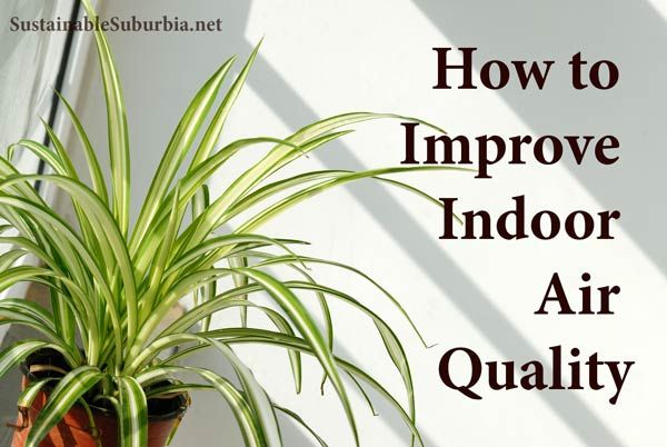77 best images about great indoor plants on pinterest for Indoor plants for better air quality
