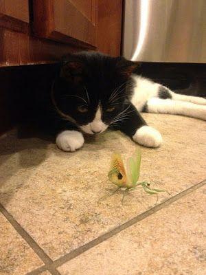Mundo de Imágenes: Imagenes divertidas: gatito acechando un gran inse...