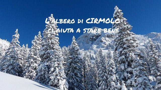 Se non puoi andare in montagna, porta il bosco a casa tua! Migliora la tua quotidianità con l'Olio Essenziale di Cirmolo.