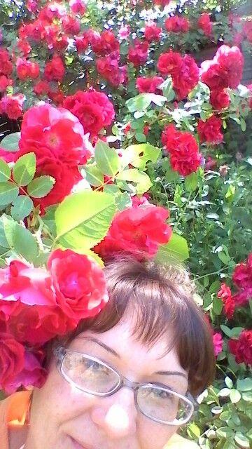 Мои вьющиеся розы