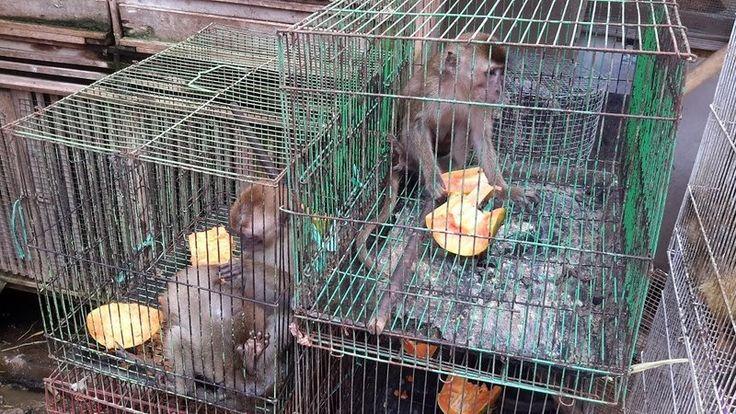 PETITION · Mayor of Bandung: Close Down Sukahaji Wildlife Market · Change.org