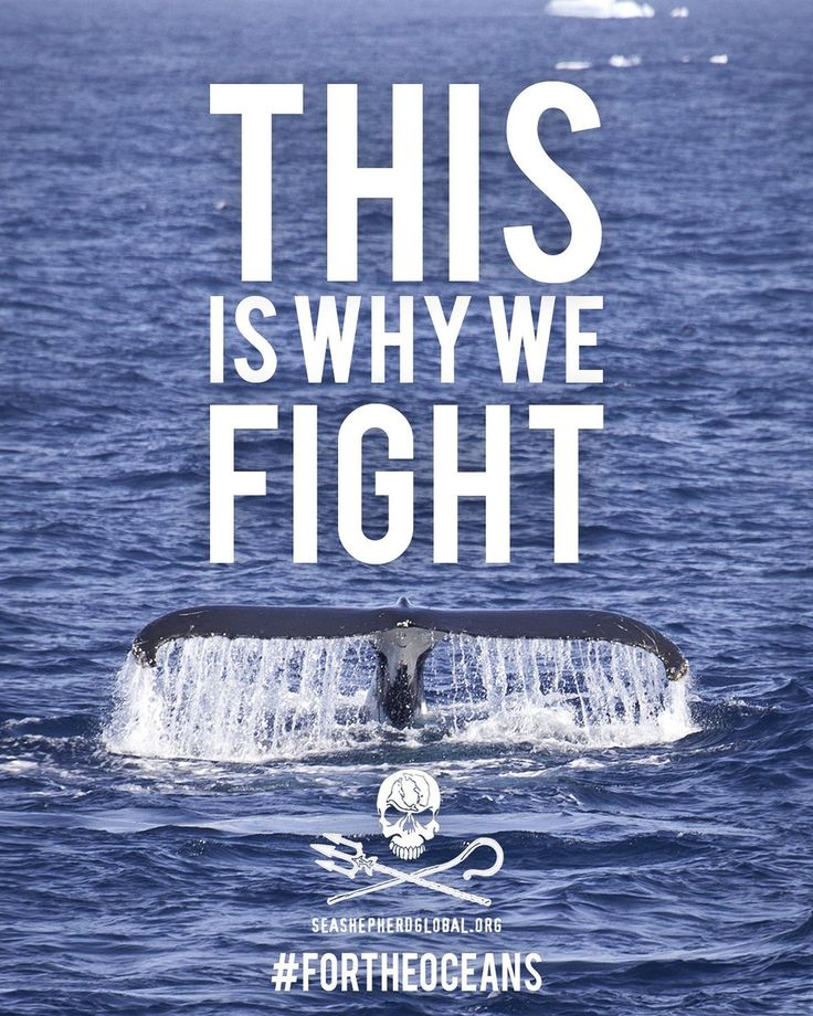 Sea Shepherd is protecting our oceans! Follow and Support