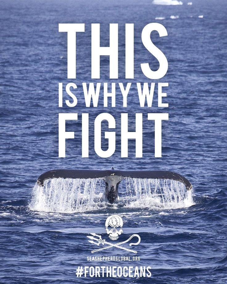 Sea Shepherd (@seashepherd) | Twitter