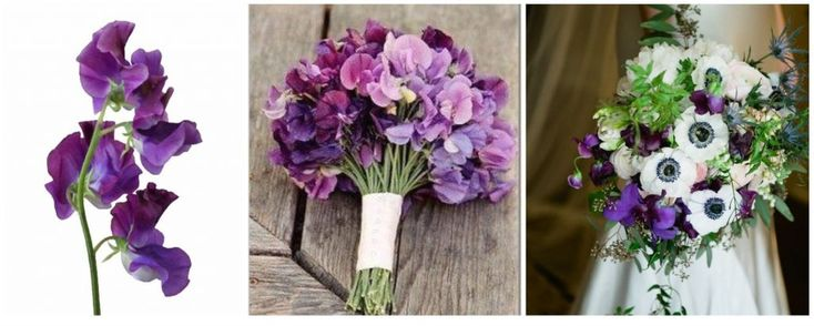 lathirus, mazariche mov si lila, buchet de mireasa si nasa