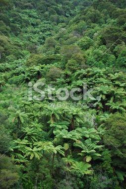 Lush Punga Fern Bush, New Zealand Royalty Free Stock Photo