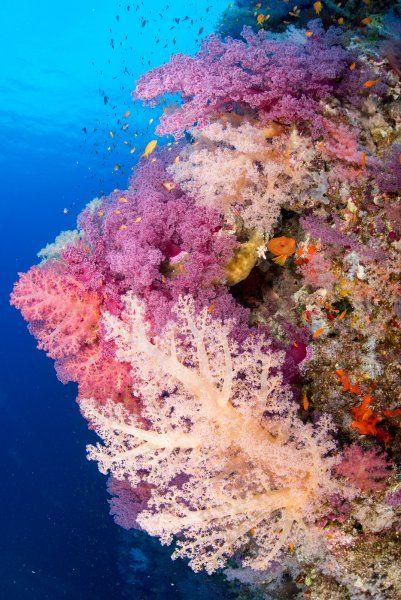 Kein Stück Fels, das nicht bewachsen ist. Die intakte Unterwasserflora am Riff...