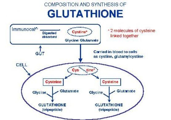 Glutathione & Selenium: Glutamine is the most important antioxidant of our body, Selenium is one of the most well known. Otherwise fight infections and diseases, like Ebola.