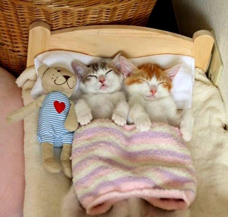 Анимашки, смешные картинки с котиками спокойной ночи