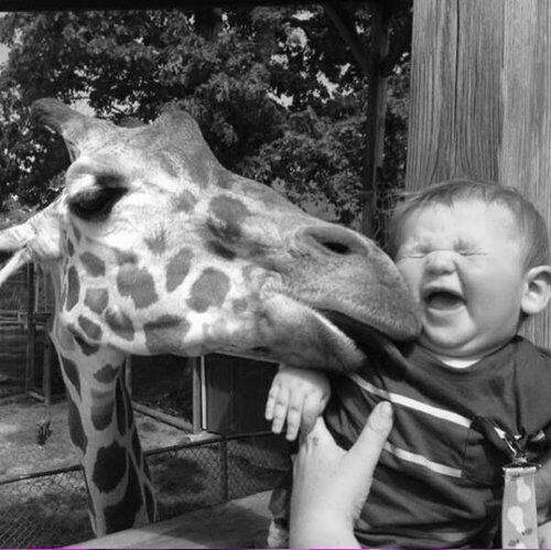 Sloppy Kisses !  c @georginapoppa #photography #nature