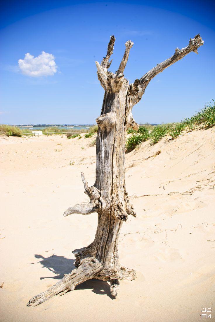 Native Tree?