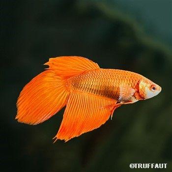 Les 25 meilleures id es de la cat gorie poisson d 39 eau for Petit bac a poisson