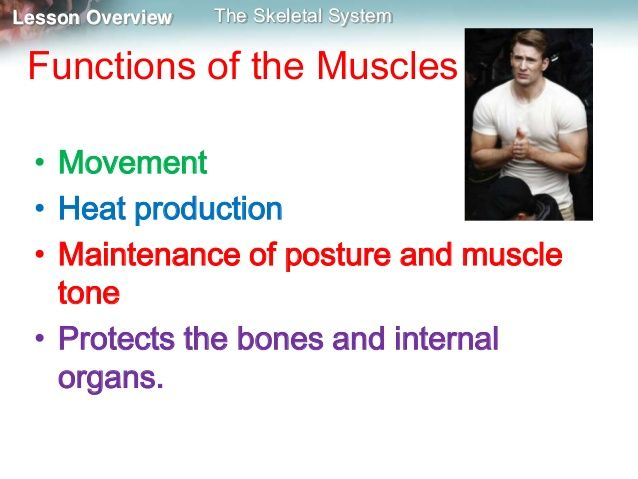 Skeleton, muscles and movement mine