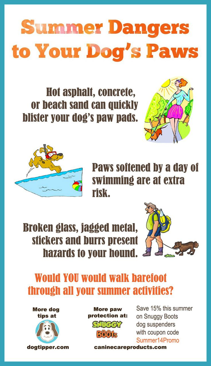 Summer dangers to your dog's paw pads!