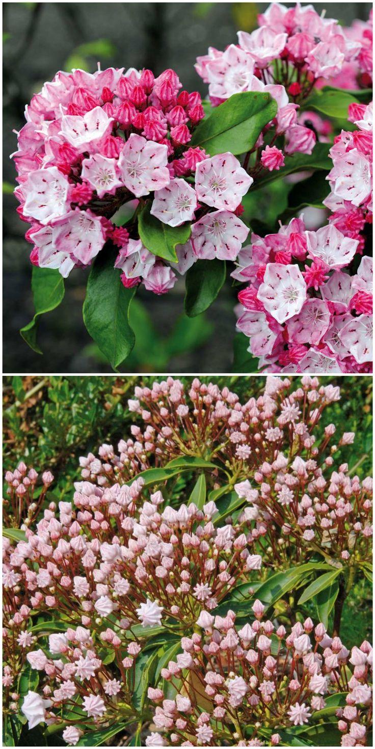 11 best Gartenpflanzen für Beet und Kübel images on Pinterest
