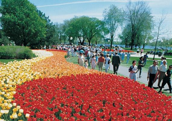 Canadian Tulip Festival.  Dow's Lake Pavilion.