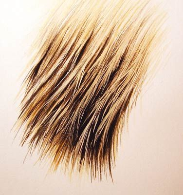 Here's a way of painting hair or fur in watercolour, specifically lighter hair falling over darker hair. A few more demos, step-by-steps an...