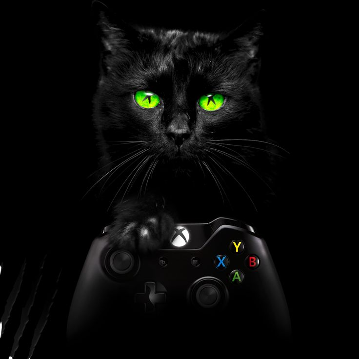 #blackfriday #blackcatfriday #xbox