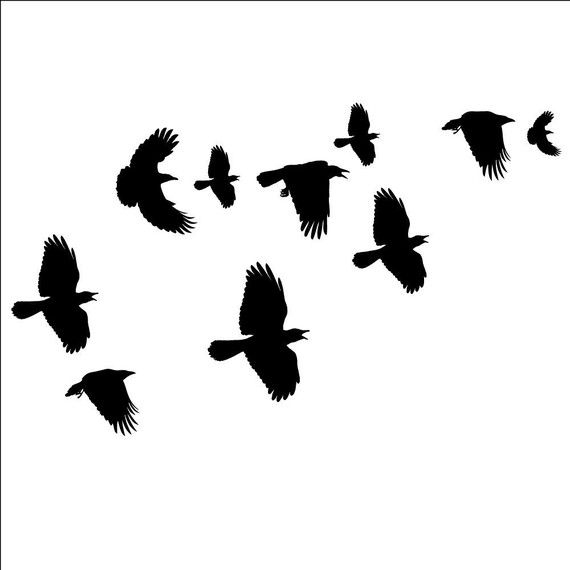 Flock of Crows Wall Decals for Hitchcock bathroom.