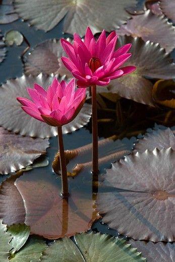 Subtle color palette - dark taupe, bright rose, moss