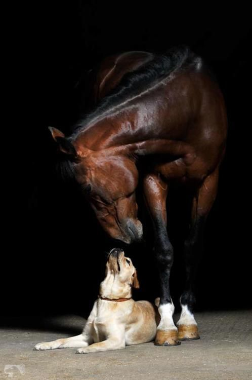 My, you sure are big!: Kiss, Best Friends, Bestfriends, Pet, Baby Dogs, Horses And Dogs, Photo, Big Dogs, Animal