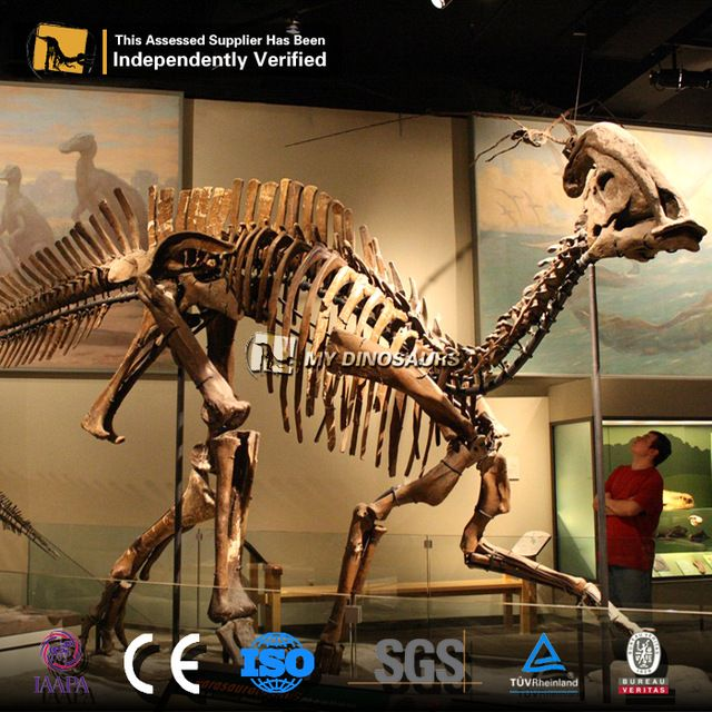 Source MY Dino SF-04 Resin Dinosaur Skeleton for Sale on m.alibaba.com