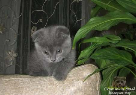 Имена для котят-девочек