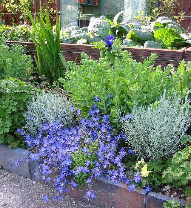 Голубые цветы на клумбе. Как красиво оформить цветник, или ...