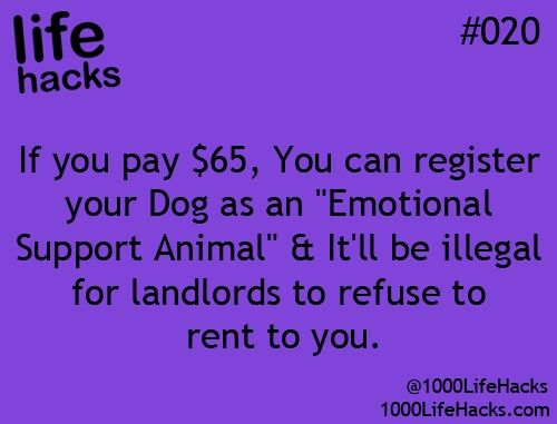 Emotional Support Animal registration may help me get a pet and an apartment sooner!