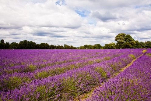 I'll leave you with this beautiful lavender field. It has the power of calming down just by looking at it.