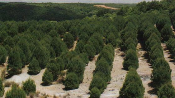 Arazi ve kredi devletten ağaç dikimi devletten